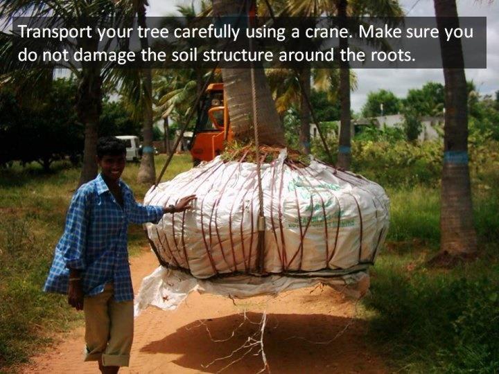 Tech_Tree Transplantation.jpg