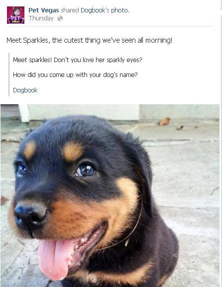 Cute dog on FB